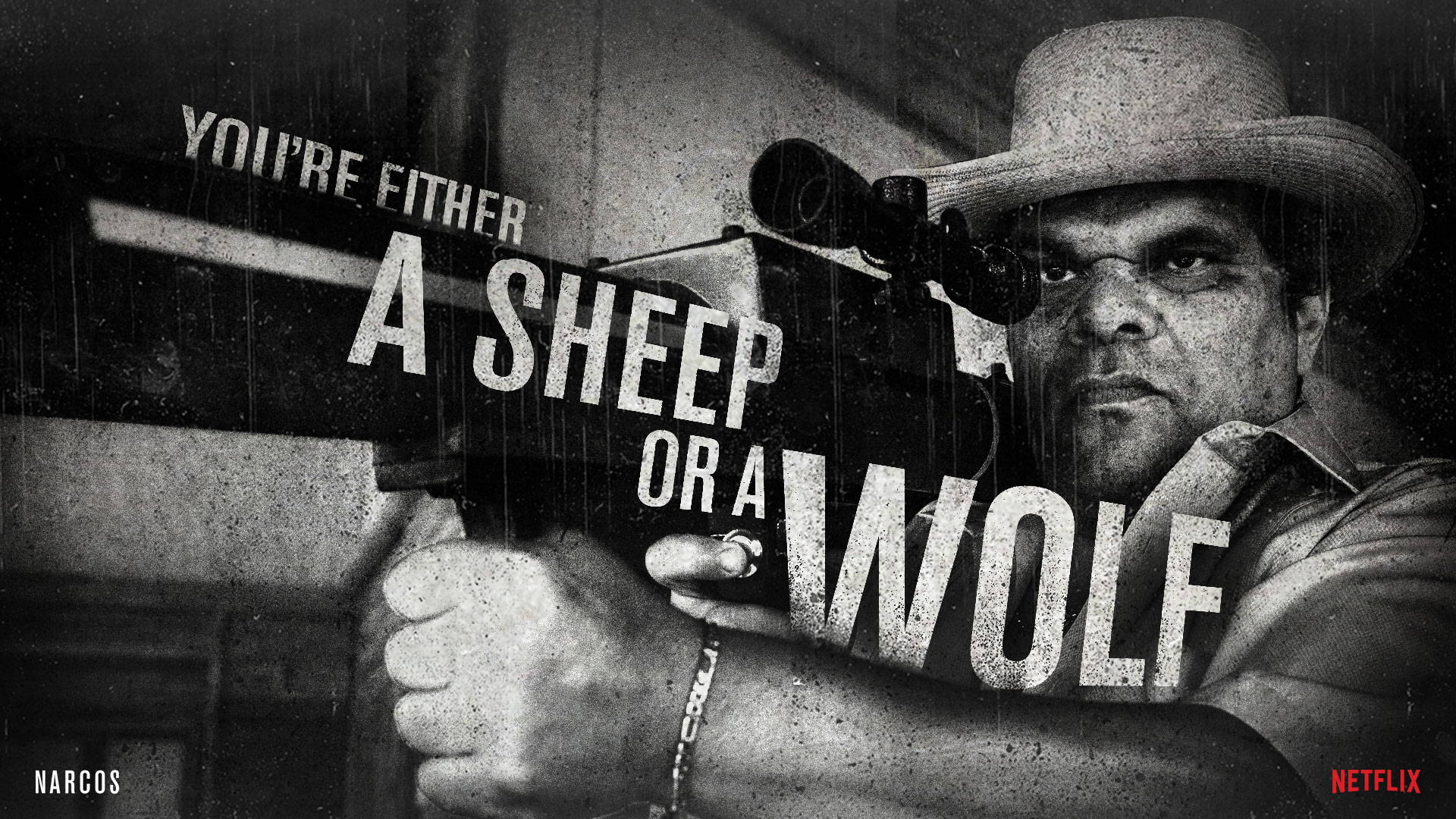 Narcos Sheep in Wolf