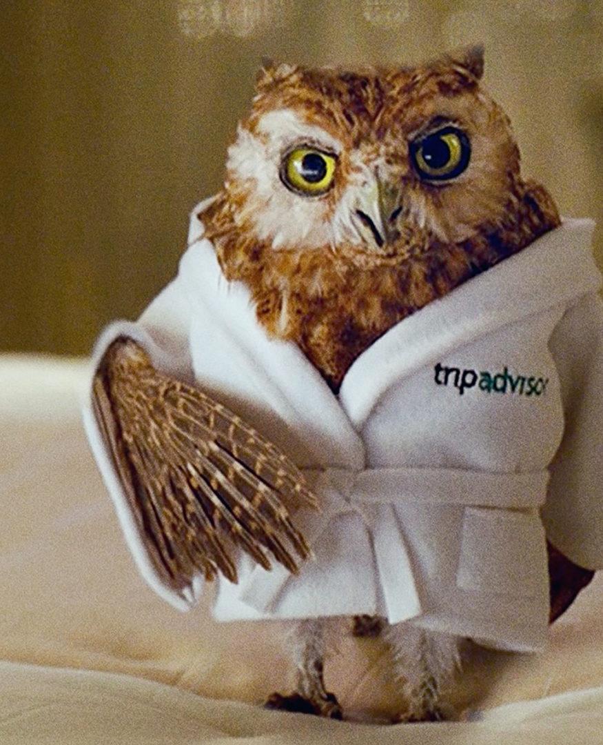 TripAdvisor Lil Wiser Ad Campaign