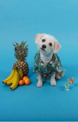 Dog Friendly Ad Agency